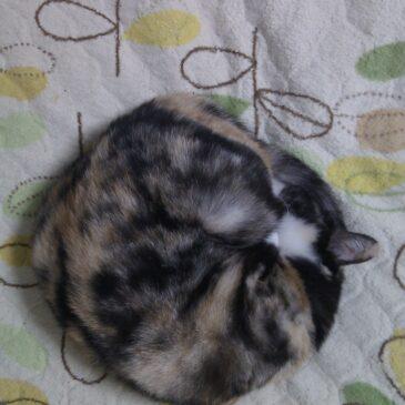 完全なる猫団子ソロ